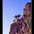 Palms #01