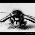 Wasp #05