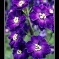 Flowers #34