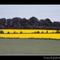Field #02
