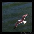 Seagull #12
