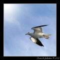 Seagull #13