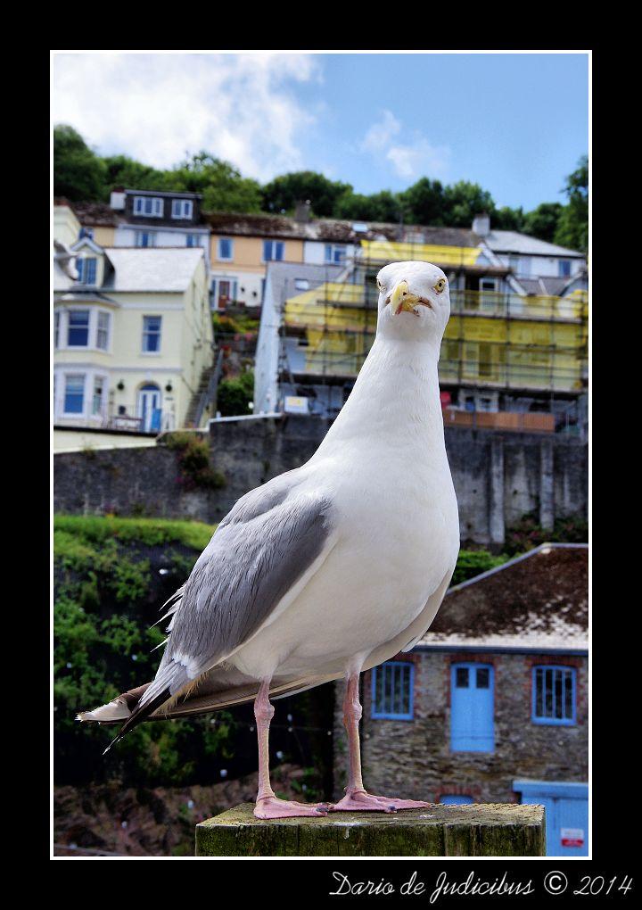 Seagull #26