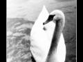 Swan #01