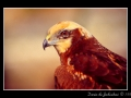 Hawk #02