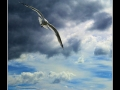 Seagull #01
