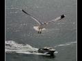 Seagull #04