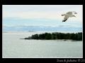 Seagull #05