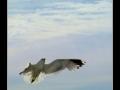 Seagull #06
