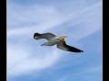 Seagull #07