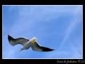 Seagull #09
