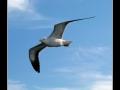 Seagull #14