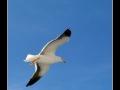 Seagull #16