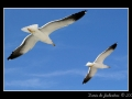 Seagull #17