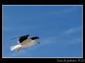 Seagull #18