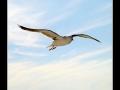 Seagull #19