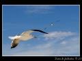 Seagull #20
