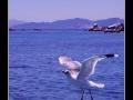 Seagull #23