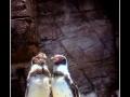 Penguins #01