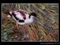 Bird #01