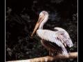 Bird #02