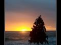 Christmas Tree #01