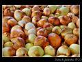 Onions #02