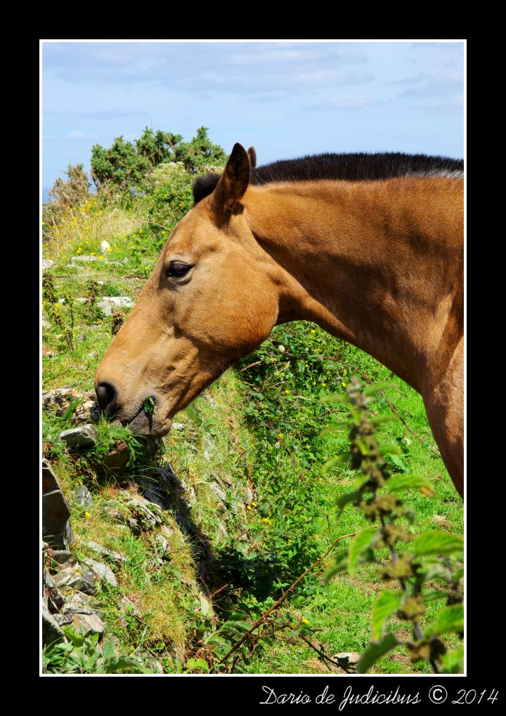 Horses #07