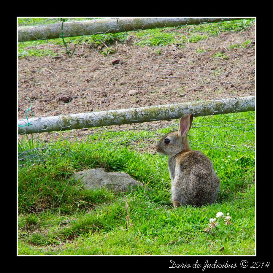 Rabbit #03