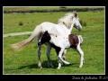 Horses #05