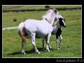 Horses #06