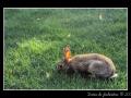Rabbit #01