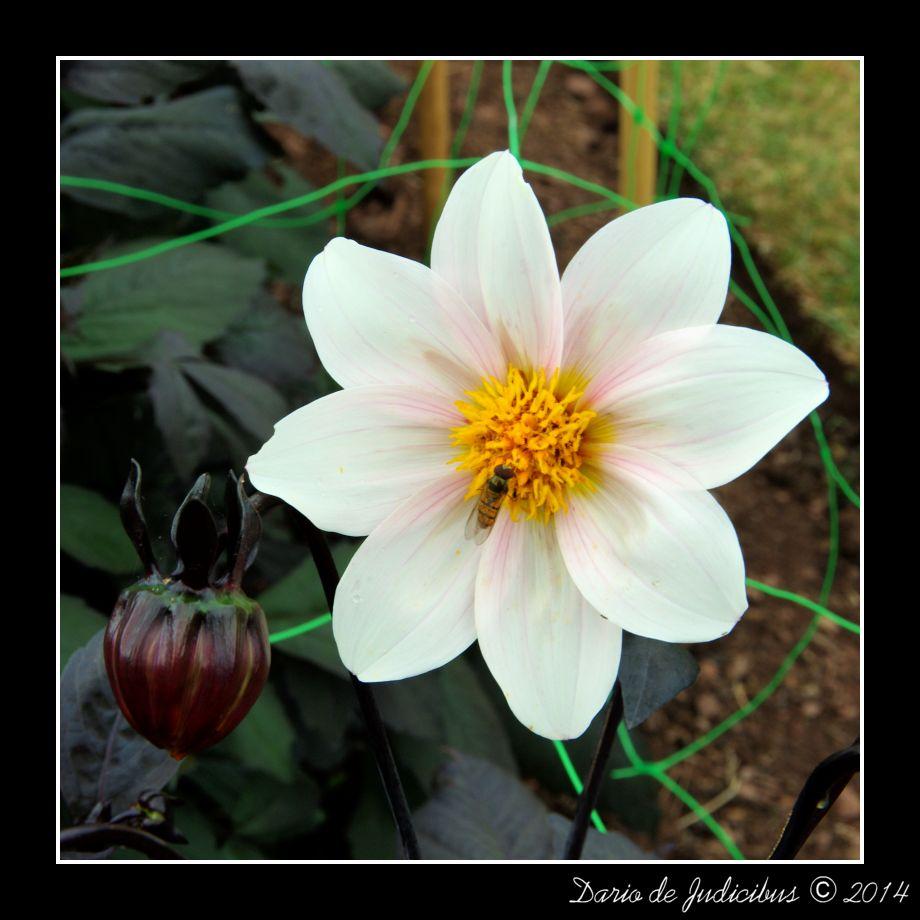 Flowers #33