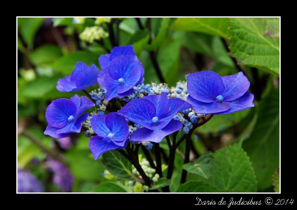 Flowers #23