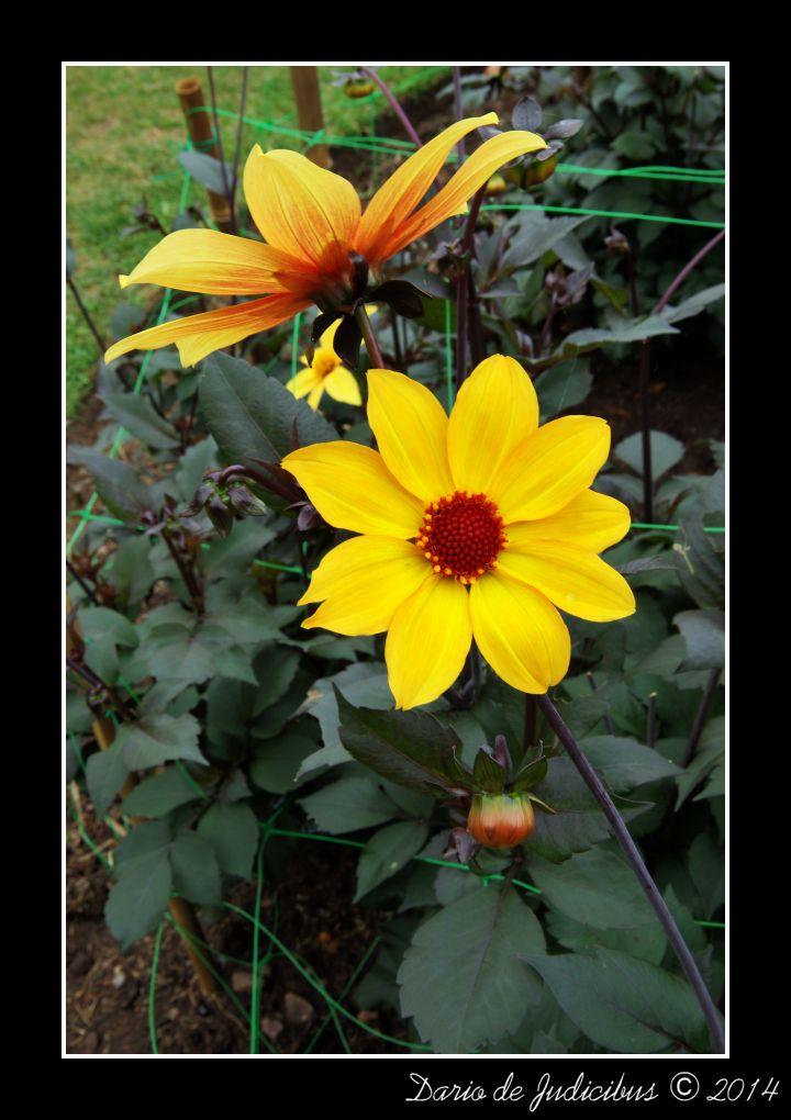Flowers #29