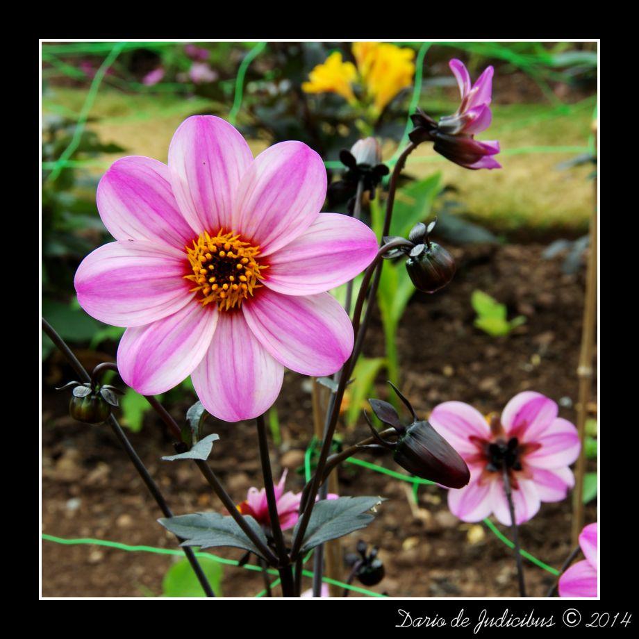 Flowers #30