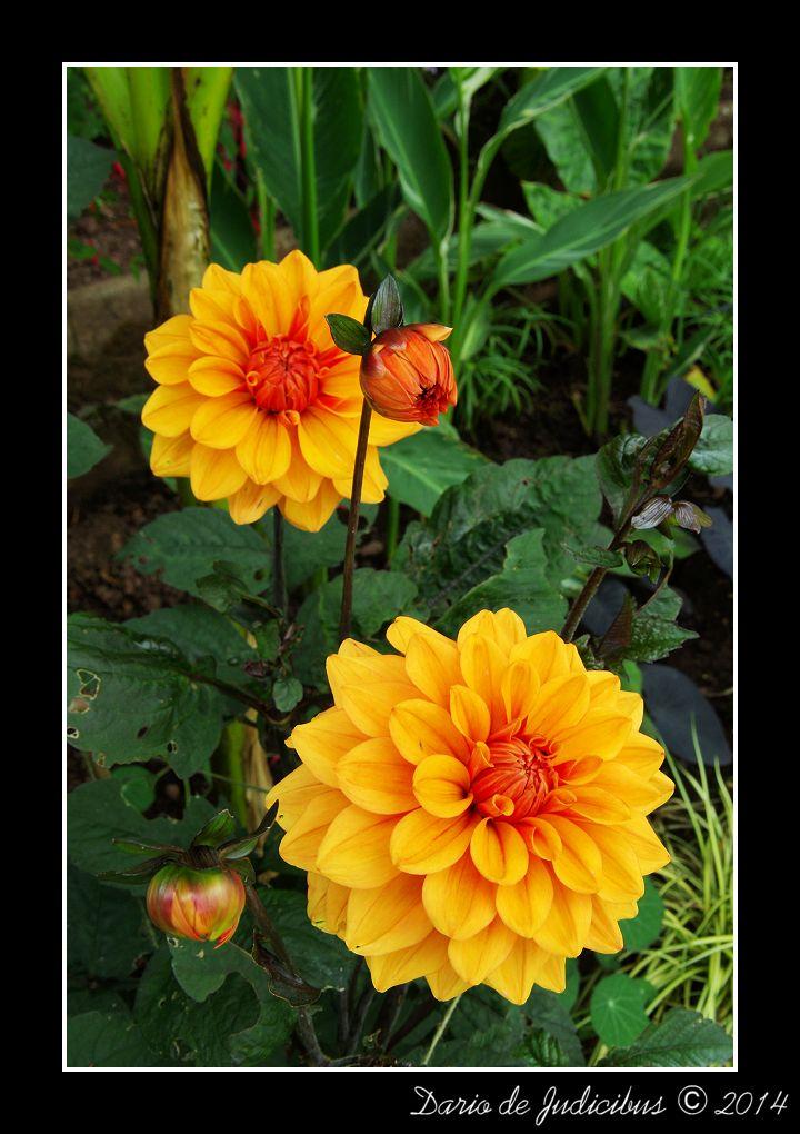 Flowers #32
