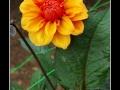 Flowers #27