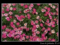Flowers #22