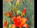 Flowers #08