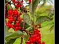 Berries #04