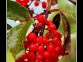 Berries #05