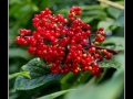 Berries #06