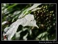 Berries #07