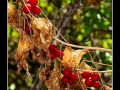 Berries #01