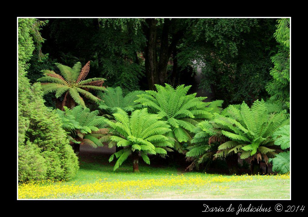 Garden #01
