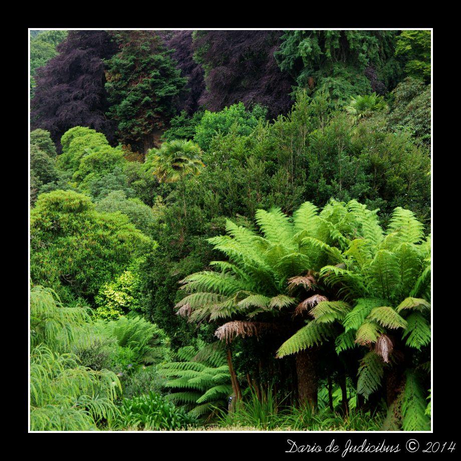 Garden #03