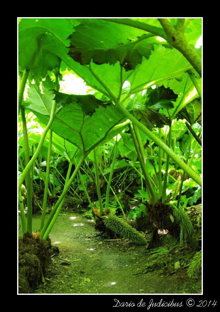 Garden #05