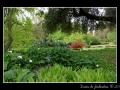 Garden #08