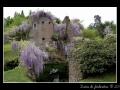 Garden #13